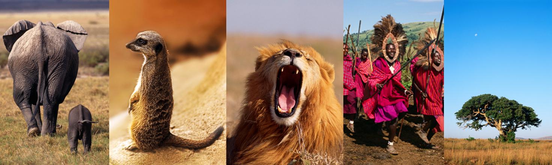 Planning your safari