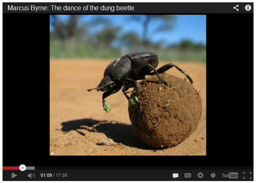 Dung beetles copy