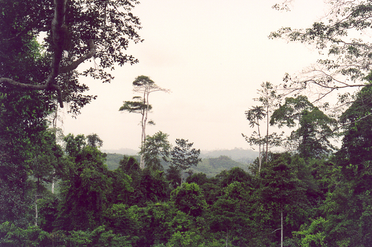 Kakum National Park Rainforest