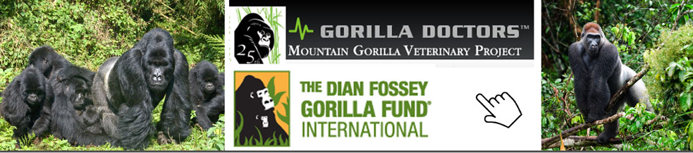 Endangered mountain and lowland gorillas - Africa