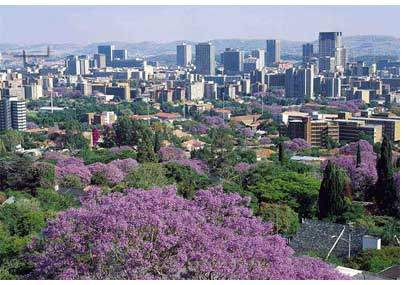 Pretoria and Jacaranda trees in bloom