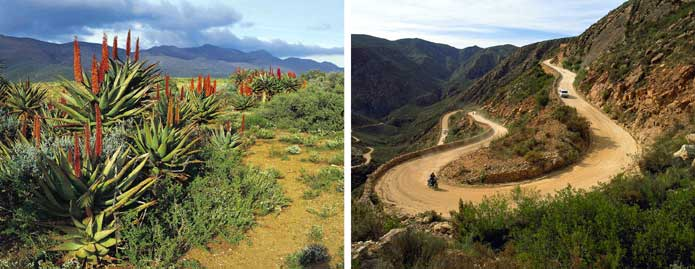 Mountain passes - fynbos and Swartberg Pass