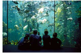 The Two Oceans Quarium at Cape Town's V&A Waterfront