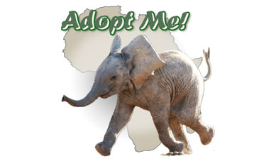 Adopt-a-Page Logo